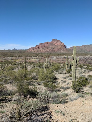 Some desert hike views